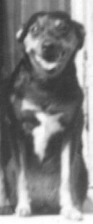 Laika, la perra sonriente
